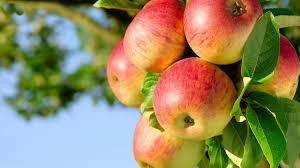 motivasi buah di pohon